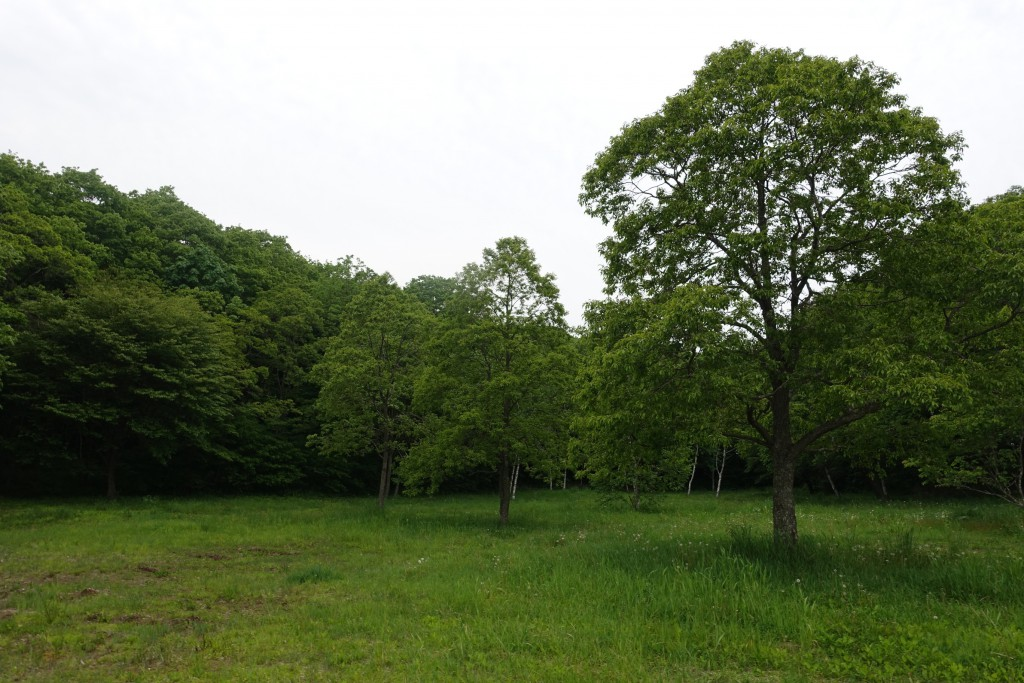 Atsuma_29
