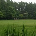 江別市森林キャンプ場 〜札幌至近(下見)